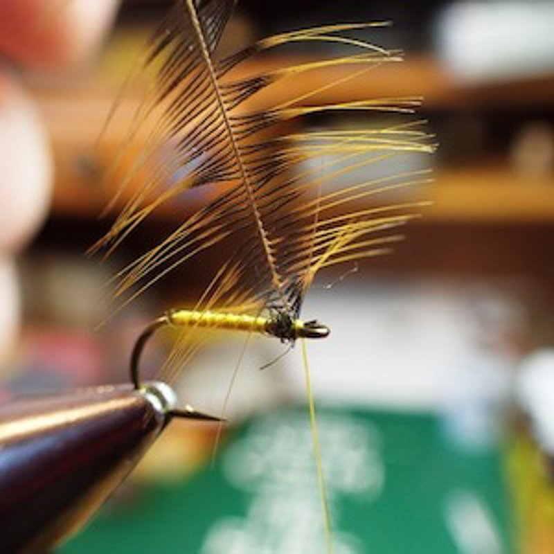 8. Step 8 Select Hen Greenwell feather length of fibres slightly longer than hook gape and tie in directly behind eye