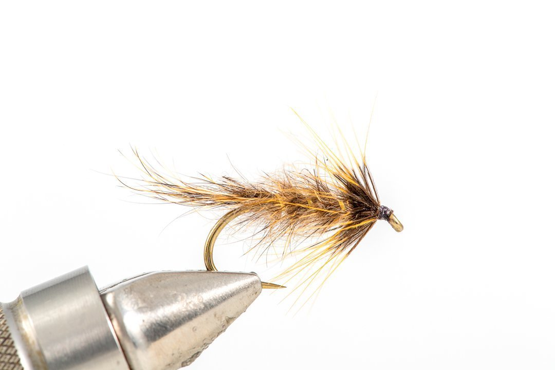 Gold Ribbed Hares Ear Cruncher